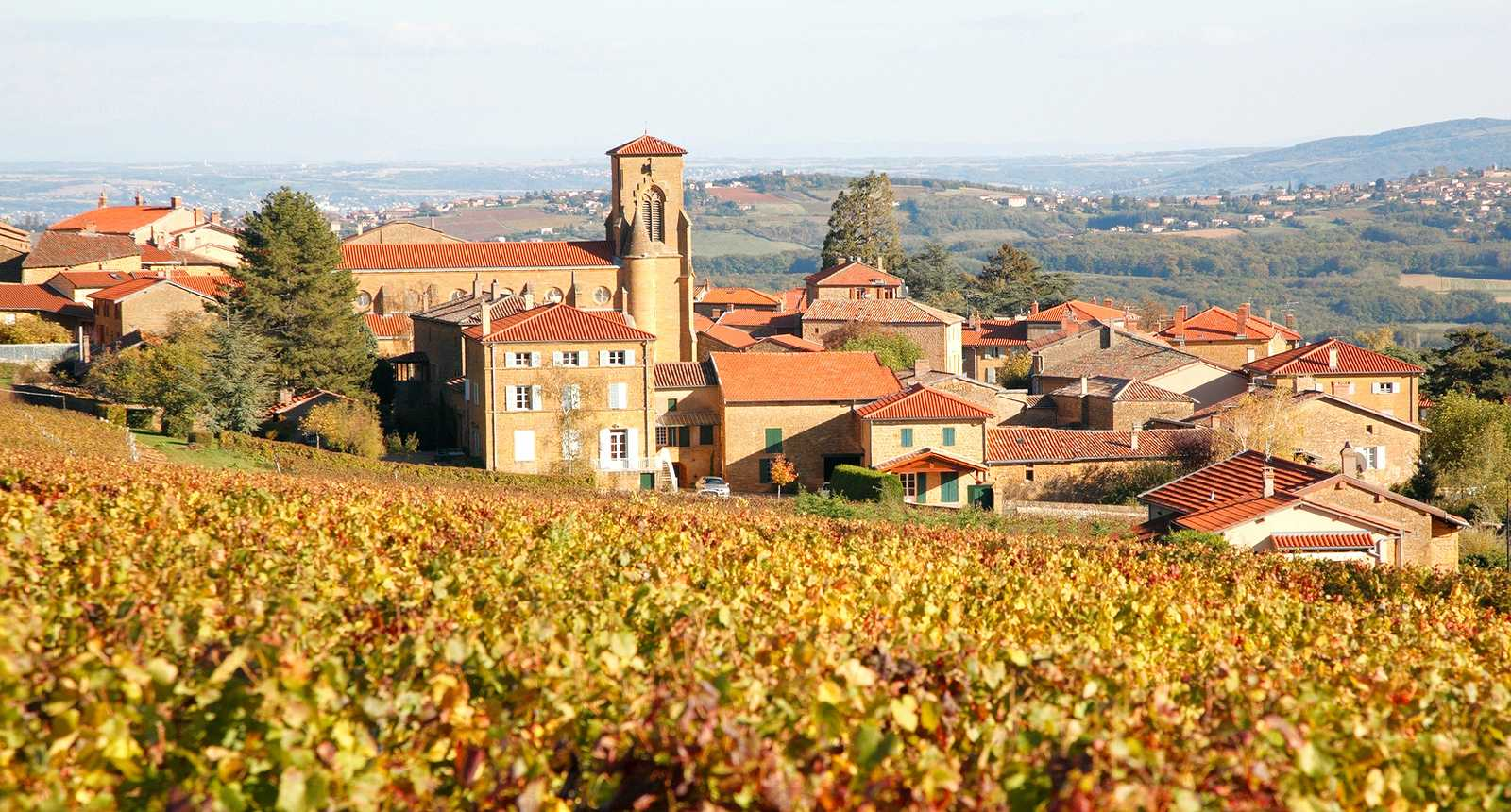 theize-in-beaujolais